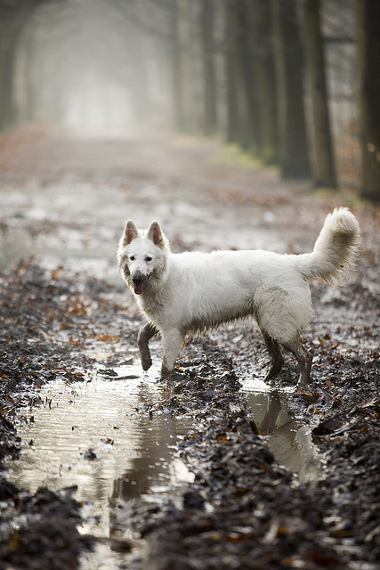 awelltraveledwoman:  My next dog is going to be a white husky and I'll name it Aspen and the next one Denali and the next one Denver and then I'll have a full pack and people will think I'm crazy.
