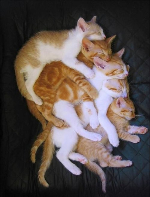 Stack of Five Cats Spooning They're the Pringles of the cat world.