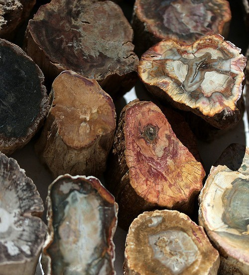 puredelusionz:  petrified wood, i have my own big chunk somewhere  I have a slice of petrified wood somewhere,it's beautiful! It looks like stone,sort of like a geode…it fades from dark to a creamy centre that will glow when held up to light