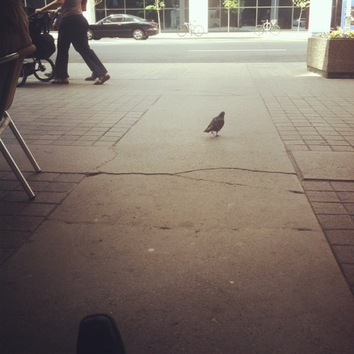 Pigeons here don't curr #toronto  (Taken with instagram)