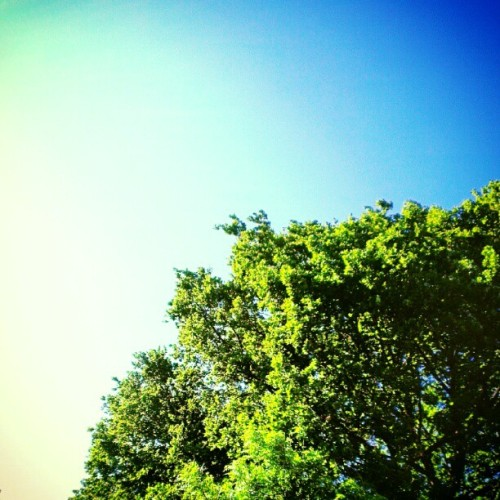 This is today (Taken with instagram)