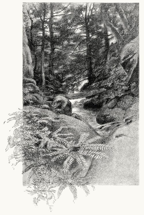 oldbookillustrations:  That mossy stone beside the stream. W. Hamilton Gibson, from Eudora, a tale of love, by Mary Bertha McKenzie Toland, Philadelphia, 1888. (Source: archive.org)