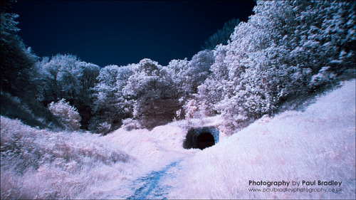 Tunnel on Flickr.Filtered digital infrared