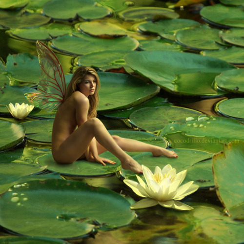 nudepageant:  Lily Fairy by *Cocodrillo
