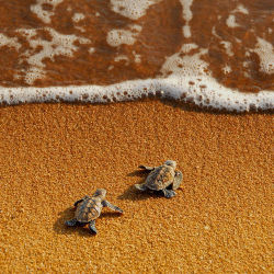summer-t4nlines:  queue, in Spain/ Summer☼   TURTLES <3 :D