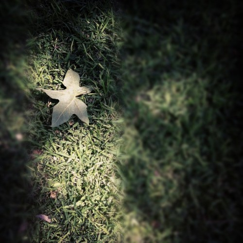 Green Leaf (Taken with instagram)