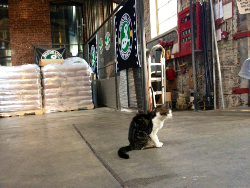 The Brooklyn Brewery's guard cat.