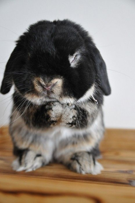 fuckyeahcuteanimalss:  (via Dear God, please send more carrots…)