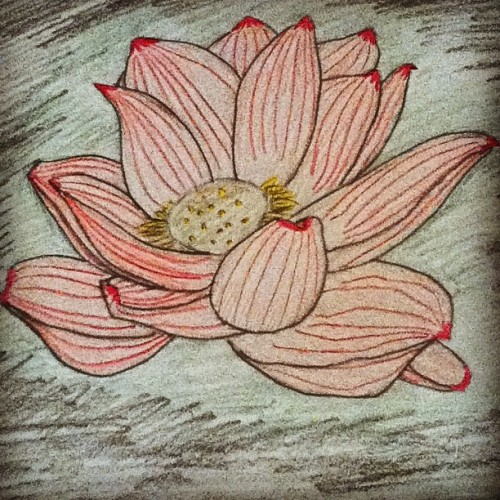 This is probably the worst Lotus that I've ever done. Sorry. Mom asked me to make her a flower picture for her wall. This is the sorry thing she'll get. ^^' #art #sketch #colouring #drawing  (Taken with instagram)