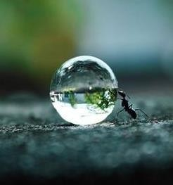 liquige:   Ant with water droplet via Angela Clark-Grundy