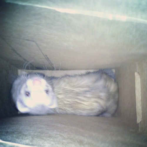 Molly in a box @j_spaulding  (Taken with instagram)