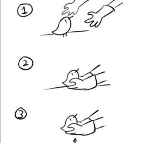 """How to pick up chicks…"""