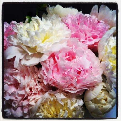 There is nothing that compares to freshly cut garden peonies, in beauty or fragrance (Taken with instagram)