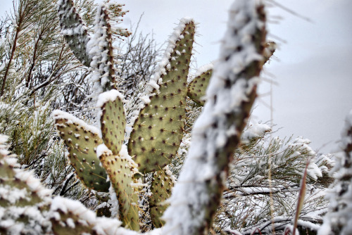arizonanature:  Frosty (by Eye of the Storm Photography)