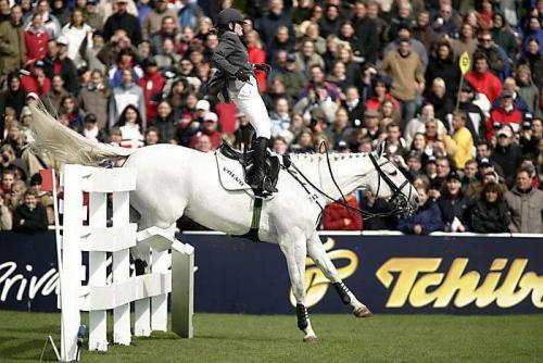 economeesh:  equinefeather:  Jumping no hands ;)  look ma, no hands