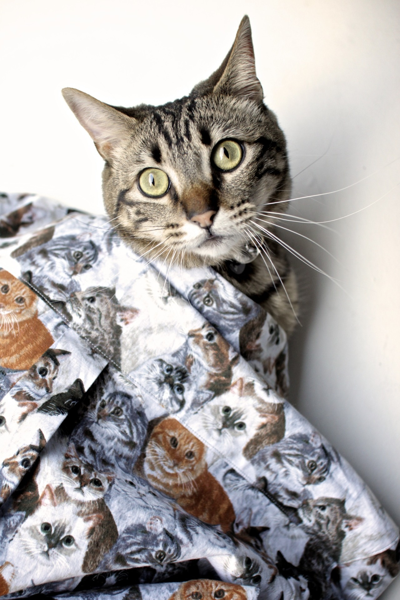 ripndiplivefeed:  Restock of the Nermal button downs and the new ripndip summer line drops June 1st 12:01am. www.ripndipclothing.com