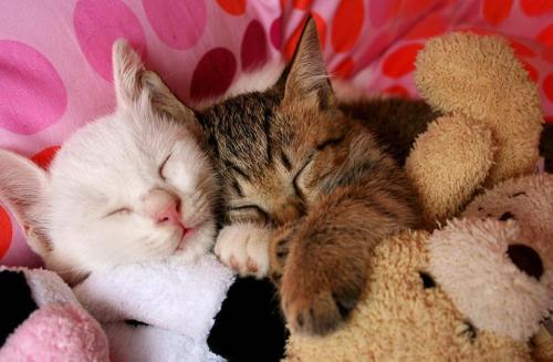 llbwwb:  Sweet Dreams and Cuddle Wonderful Friends :) By:jujuba