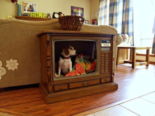 unconsumption:  A huge old console television, acquired for $4 at a Habitat for Humanity ReStore, gets repurposed as a sweet dog bed. Well done. To DIY, see Fried Okra blog. Reminds me of this computer monitor turned into a smaller pet bed.  Check out other pet beds and pet houses involving materials reuse here.