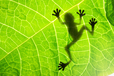 Frog Shadow by ADV