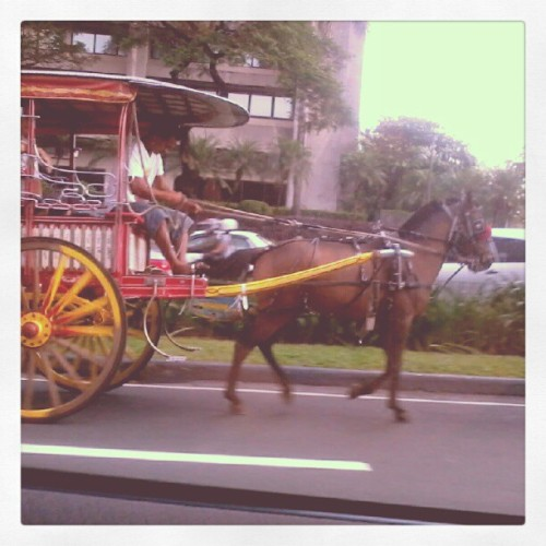 We saw a calesa in the middle of Ayala. Wild! #Makati #Manila #calesa #horse (Taken with instagram)