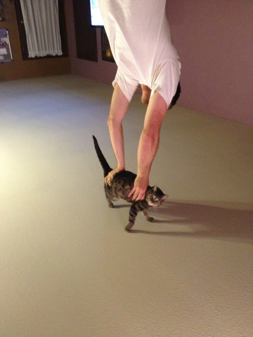 lulz-time:    i thought he was doing a handstand onhis cat