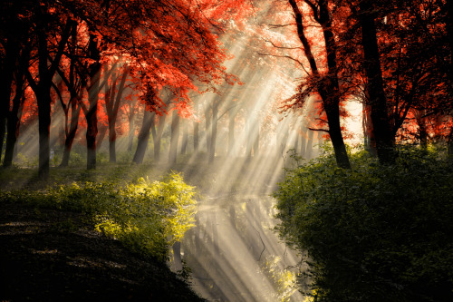 That Same Other World by Lars Van De Goor - Amazing Picsmostamazingpics.com  Beautiful Rays of Light in a Forest