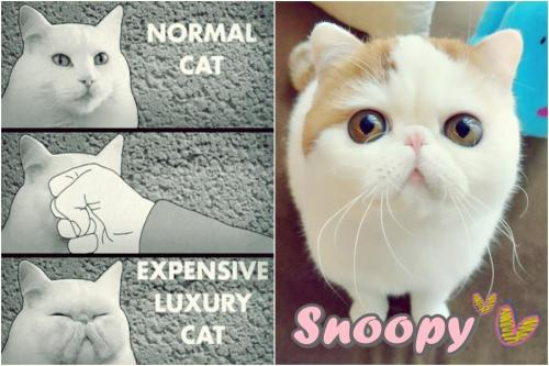 teapeut:  I love Snoopy, he's my #1 Internet cat, but this is so funny :'D