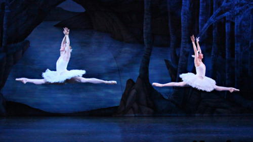 sonyanatalia:  The Queensland Ballet - Swan Lake