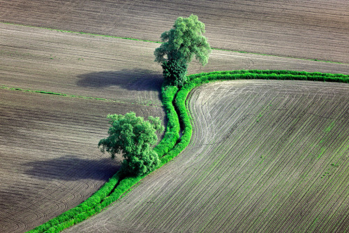 landyscape:  Young Maize (by Aerial Photography)