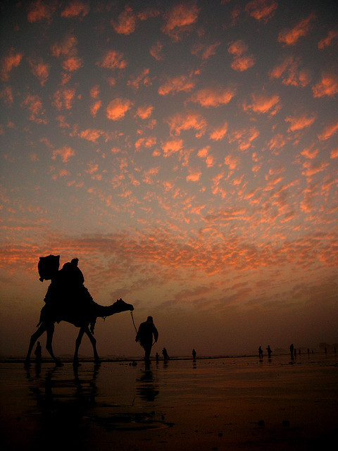 The Camel's Way Home by ali khurshid