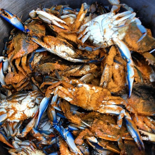thesassyhoe:  Murrland blue crabs!  I want to be back in Maryland asap