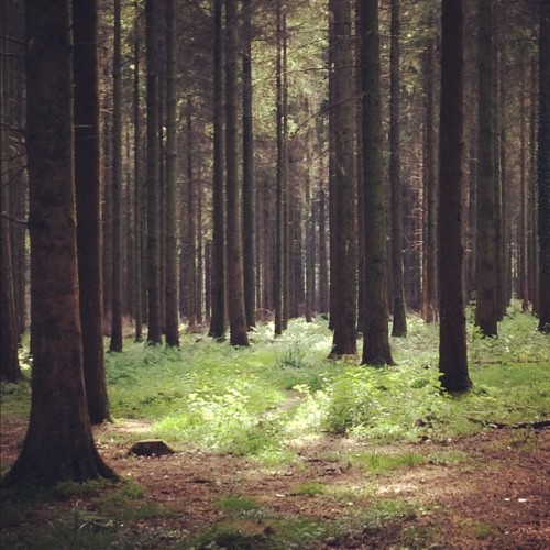 Forest. (Taken with instagram)
