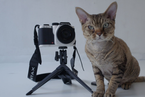 "Cat Photographer in High Demand With wedding season upon us, Ansel, a noted cat photographer from Chicago, IL, is in high demand.  ""He's booked out through August,"" Ansel's assistant, Kevin Duncan tells The Fluffington Post. According to the National Organization of Photography Enthusiasts, that's not uncommon; cat photographers are in higher demand this year than ever before.  ""Because they spend so much time seeking out the sunniest spots in the room, felines tend to have a natural feel for composition, light versus dark, hot and cold, etc.,"" says NOPE director Alvin Woolley. ""In recent years, cats have really made their mark in the art photography world, and cats like Ansel can pretty much charge whatever they want for private engagements."" Via Nyafe-melange."
