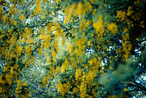 Yellow flowers on Flickr.