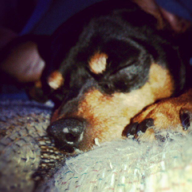 #lazydog #spoiledrotten  (Taken with instagram)