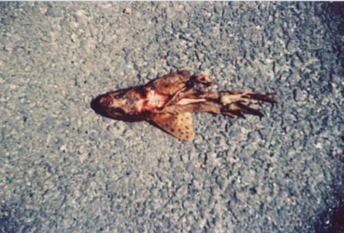 Dead fish, Hastings Taken with a Halina Camera