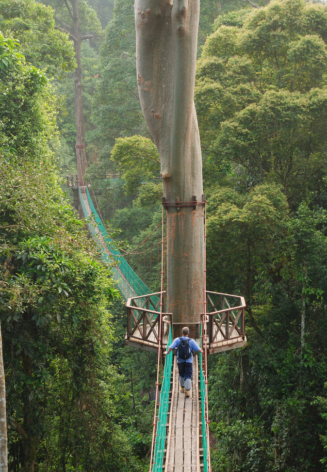 Borneo Rainforest Canopy Walkway by Jollence Lee