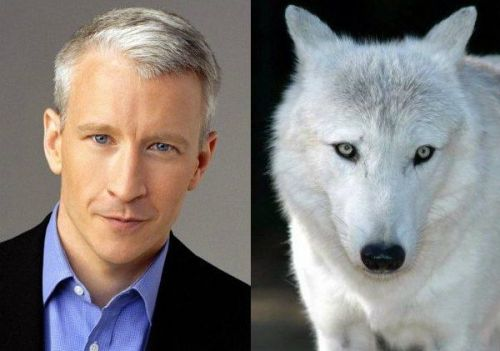 Dang, these celebrities bear an awkward resemblance to these animals - don't you think? Anderson Cooper got off lucky by looking like a wolf, but you won't believe what people say Emma Stone looks like!