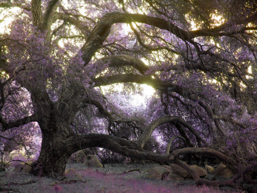 mykindafairytalee:  Fairy Tree by ~robjoeball
