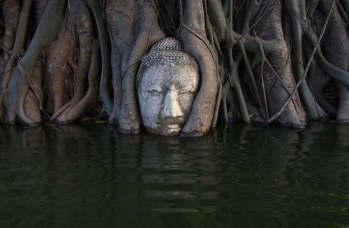 kennbrix:  A Buddha head in the roots of a Bodhi tree is partially submerged by floodwaters in the ruins of Wat Mahathat temple in Thailand's ancient capital, Ayutthaya.
