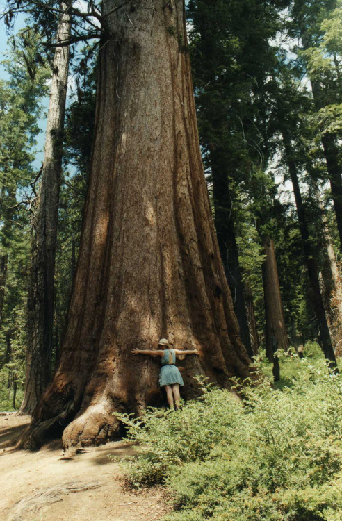 can't wait to hug a sequoia