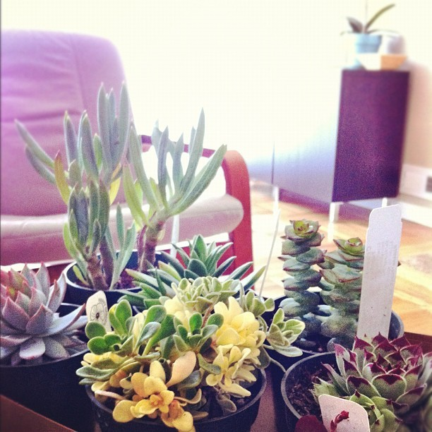 My very pretty loot from the Flora Grubb succulent sale (Taken with instagram)
