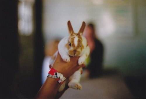Film Photography by Molly Hare