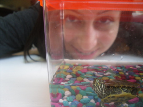 i have the worlds best turtle<3