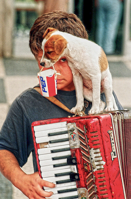 illusionwanderer:  Accordian Player in Lisbon Portugal by Greg Weeks Photography on Flickr.