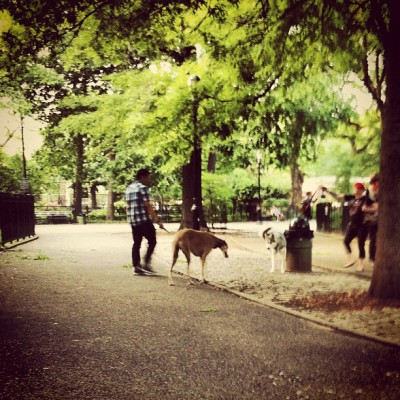 Ño que animal #LES #nyc #summer #park (Taken with instagram)
