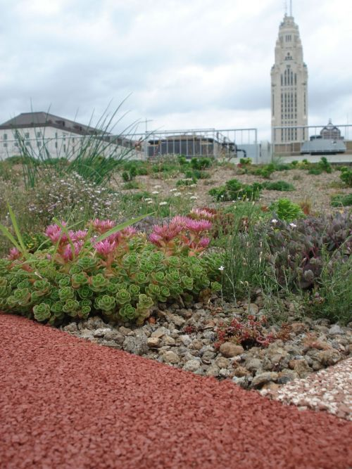 plantsonhigh:  Have you seen the green roof on top of the Ohio EPA building?   Awesome green roof in columbus.. i need to see this..
