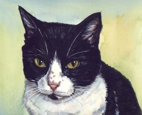 Sylvester Watercolor by Carol Wells