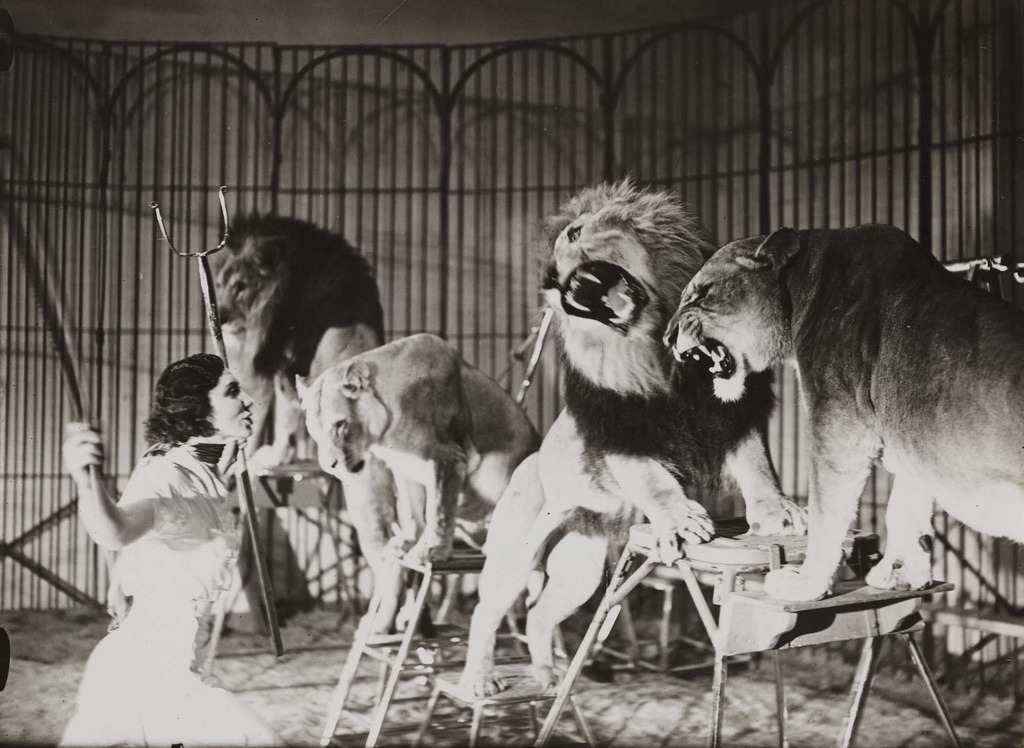 firsttimeuser:  A lion tamer at Bertram Mills Touring Circus, Ascot by Edward G Malindine