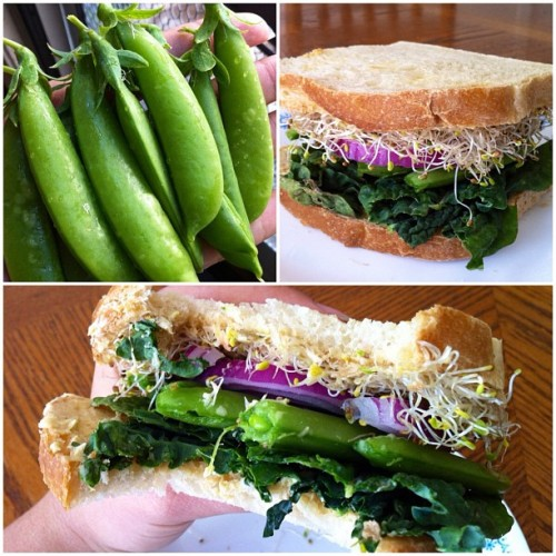 yackattack:  I made a tasty sandwich in honor of my first sugar snap pea harvest! It's kale, sprouts, red onion, snap peas, hummus and Dijon mustard on toasted sourdough. Yum!